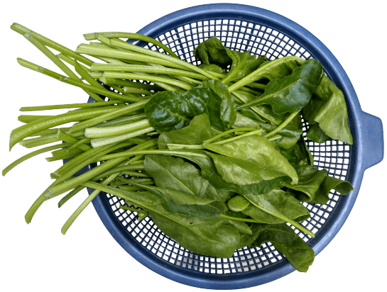 Healthy Spinach grown with macroTower